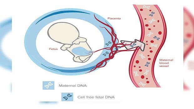 آزمایشهای غربالگری دوران بارداری